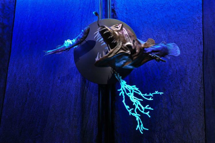 A model of an anglerfish
