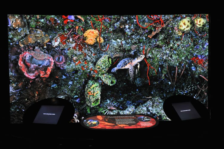 A large screen displays bioluminescent creatures