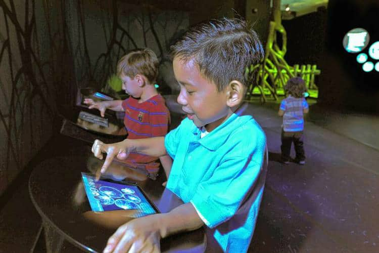 Children learn about bioluminescence using iPads