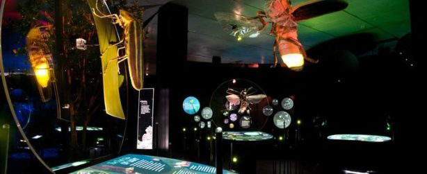 An image from the Creatures of Light exhibit